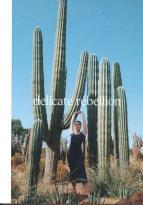 Delicate Rebellion magazine