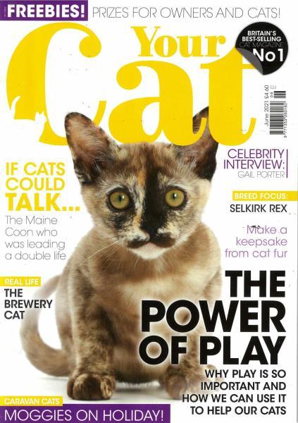 Your Cat magazine